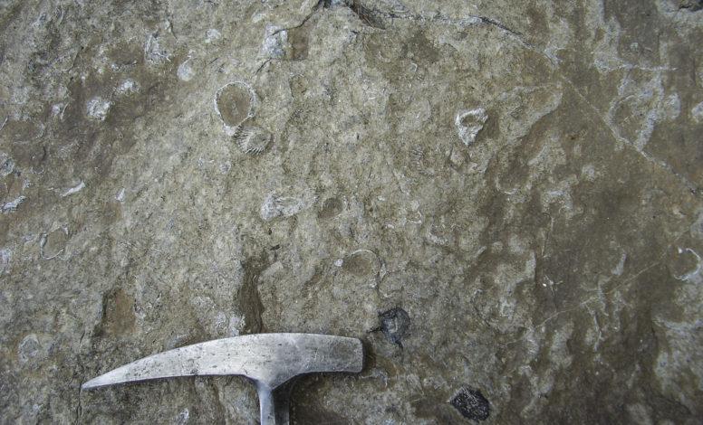 Vertebre di Ittiosauro