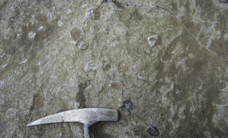 Vertebras of Ichthyosaurus
