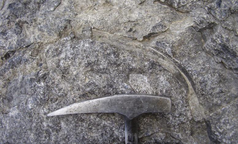 Ribs of Ichthyosaurus