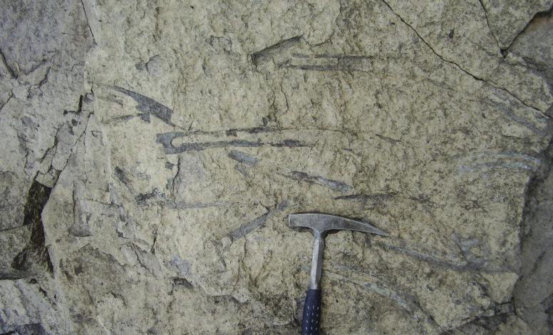 Bones of Ichthyosaurus